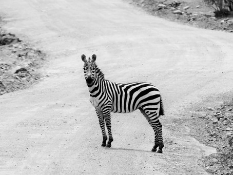 Chronic Illness and Being a Zebra