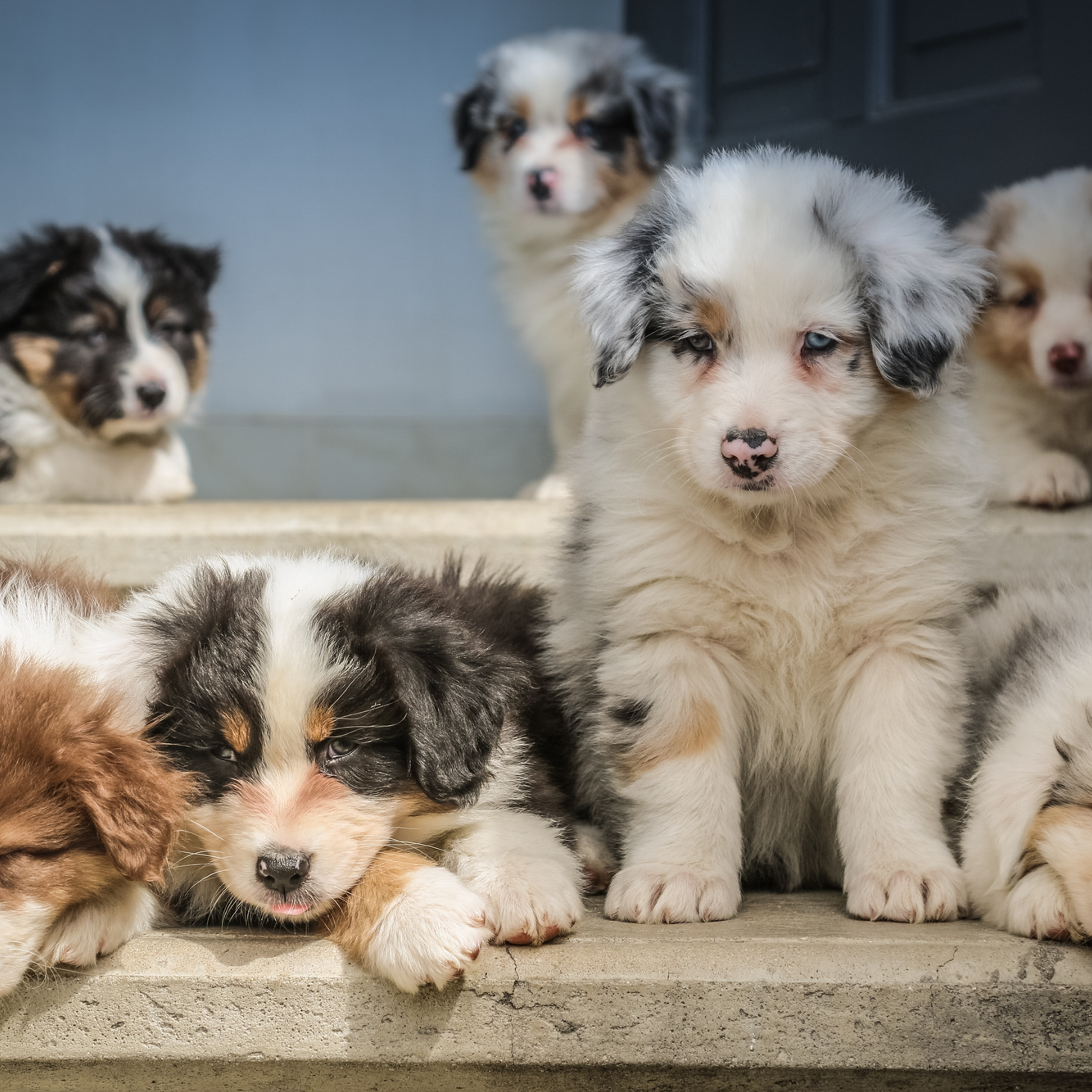 Puppy Package