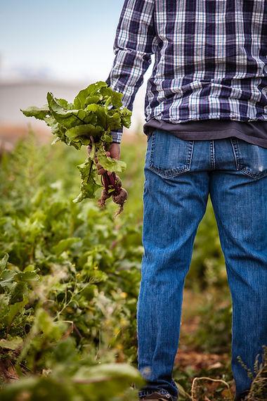 Farmer in field.