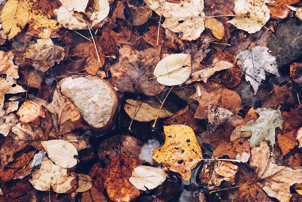 Leaves are a common cause of blocked drains