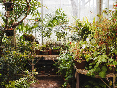 Making Magic with House Plants