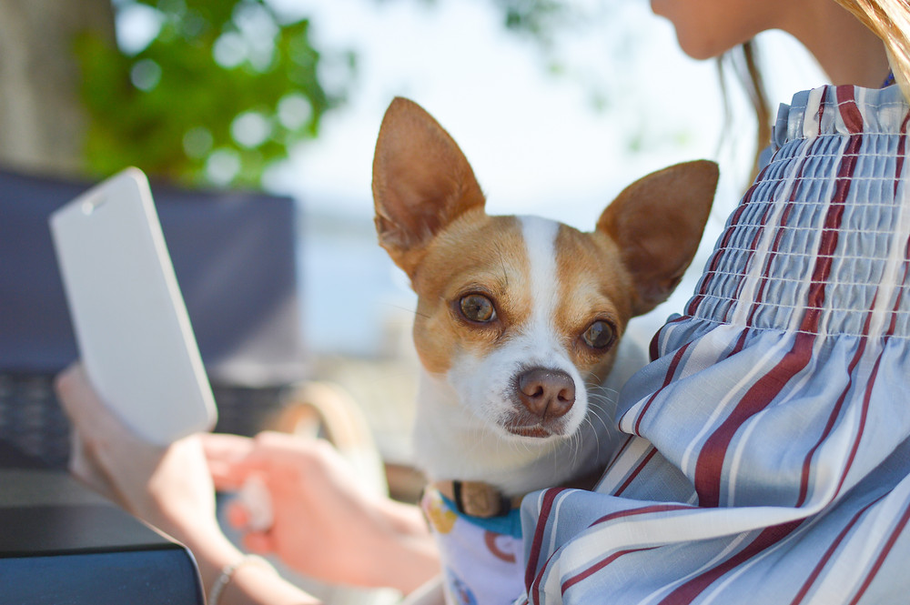 Booking a reservation checklist with Pet Waggin Pet Care in Long Beach
