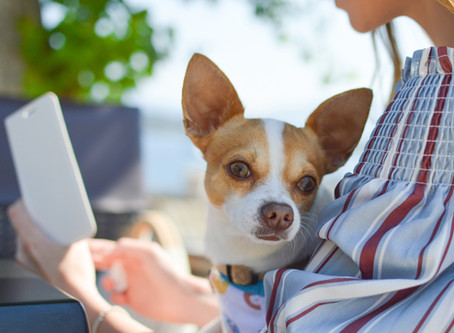 Pet Waggin Pet Care's Guide to Building Your Profile on Time to Pet