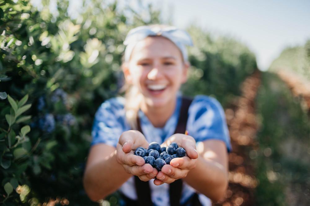 Growing Blueberries on homestead