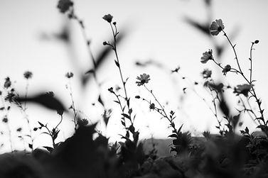 Image by Daniel Gregoire