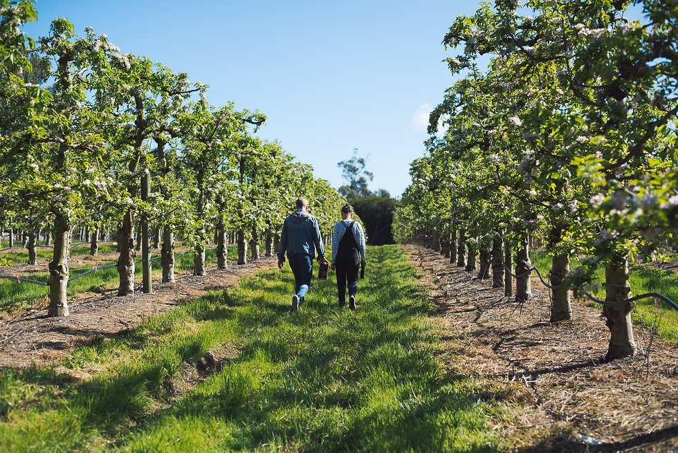 Auditors walking through a vineyard