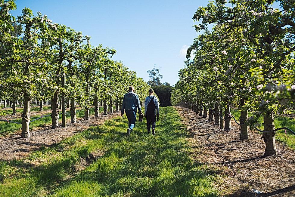 Two auditors walking through a vineyard