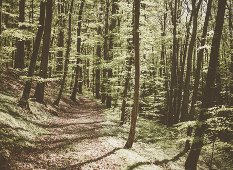 Westchester County Hikes and More!