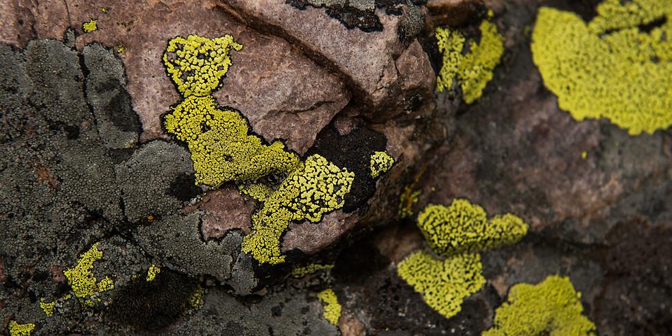 Lichen Explorations: A Virtual Naturalist Chat