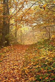 Autumn wood scene
