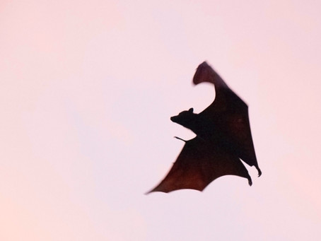 A One Health approach to fight the future epidemics: the case of Nipah virus in Bangladesh