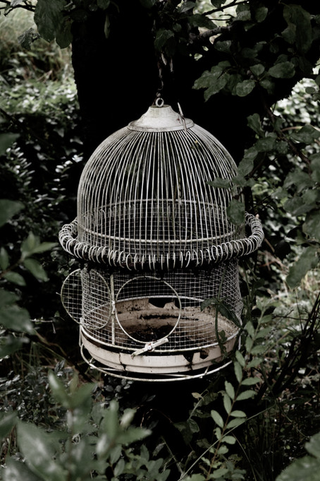The Bird is Caged