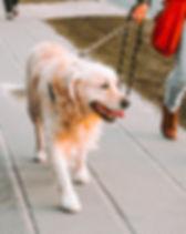 Pas de temps pour promener votre chien ?