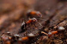 Ants and Flies Treatment - Clear Bugs | Best Pest Control Service in Lucknow, Uttar Pradesh, India