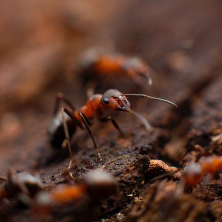 Effective Pest Control: 5 Ways to Prevent Pest Problems