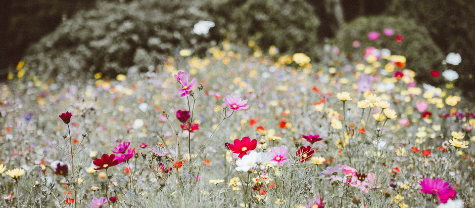 How to Grow Wildflowers from Seed!