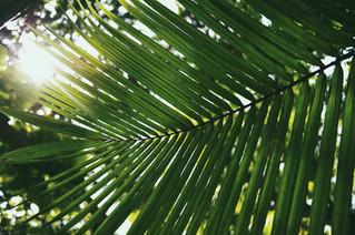 3/28 - Palm Sunday