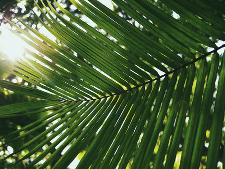 HOLY WEEK REFLECTIONS – PALM SUNDAY