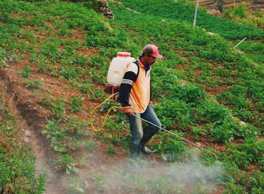 UU Cipta Kerja Buka Peluang Peningkatan Investasi Pertanian Sekaligus Ancam Kelangsungan Lingkungan