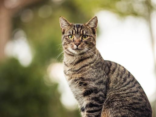 Sherbrooke : Plusieurs chats blessés par balles