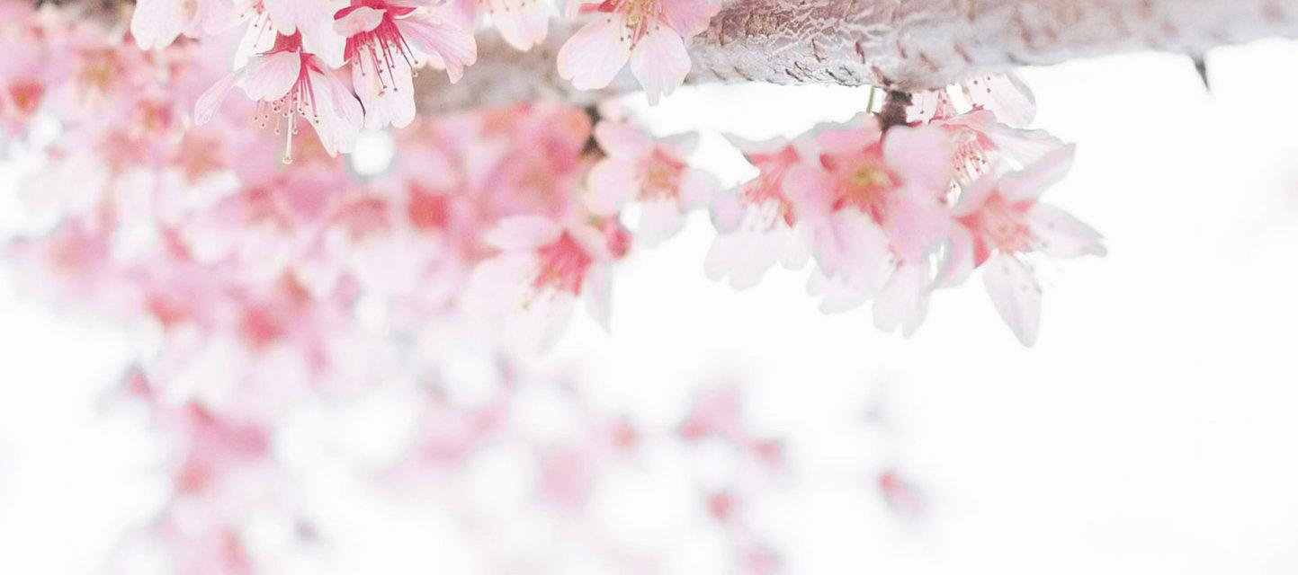 Image by TOMOKO UJI