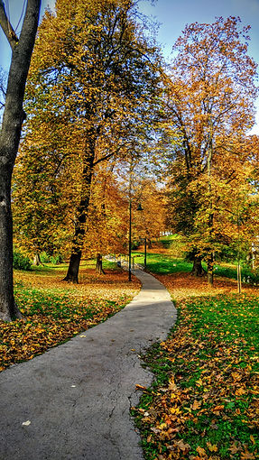 Path through the park with autumn trees. STL therapist can provide park sessions for walking therapy in Kirkwood, MO or online therapy in Missouri. Overwhelmed moms, moms of teens and postpartum counseling is here for you at Marble Wellness in St. Louis, MO.