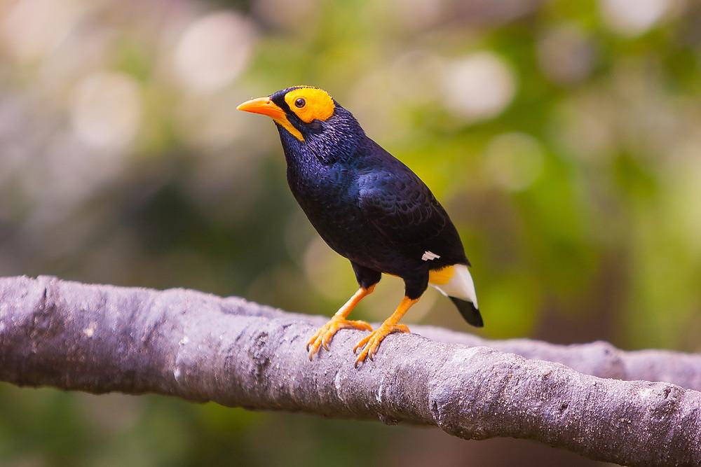 Graphic- bird sitting on a tree branch