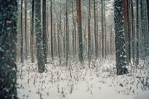 Image by Aleksander Pedosk