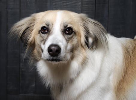 Canine Calming Signals