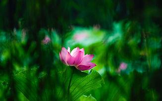 Image by he wang