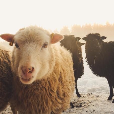 Schwarze Schafe unter den grünen Geldanlagen