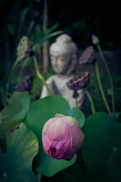 Meditate at Shambhala