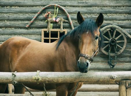 Immunerősítés lovaknak