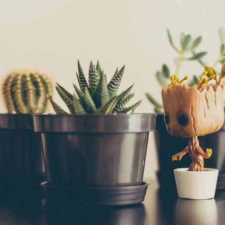 מה הצמח שלי מנסה להגיד?