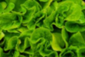 Organic Farm Fresh Sustainable Greens, Microgreens, Vegetables, New Jersey Fresh Food, Aquaponics micro Farm
