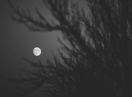 Full Moon in Virgo Diffuser Blend - Spiritual Surrender