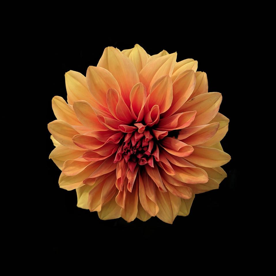 Flower: Public Information