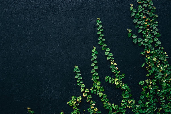 Image by Alyani Yang