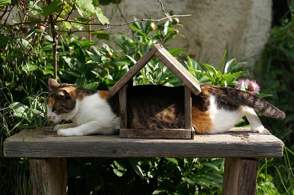 Cat stuck in a birdhouse