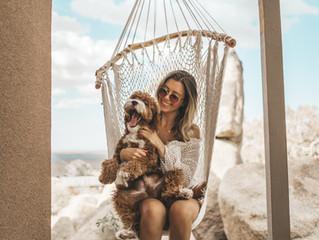 Vacacionando con mi mascota.