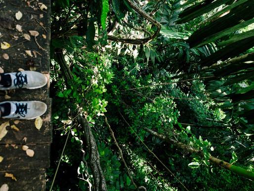Angkor Zip-lining