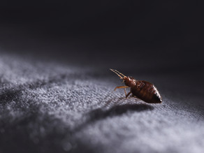 4 Reasons For Pest Control