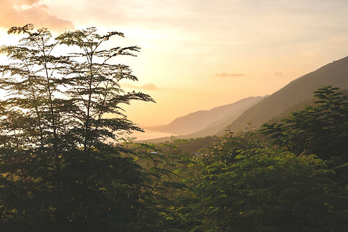Haiti Packages from 1-10,000 Trees with Monthly Subscriptions