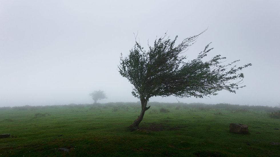 Wínd - ein Naturphänomen