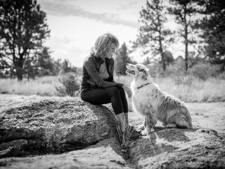 Avoir un chien obéissant et bien dans ses pattes : la méthode positive