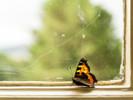 Butterflies with Clipped Wings - Bakhtawar Tayyab