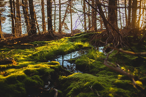 Image by Erik Mclean of a stream covered in moss, feeding into a lake. The image represents how online coaching can help individuals and couples in distress.