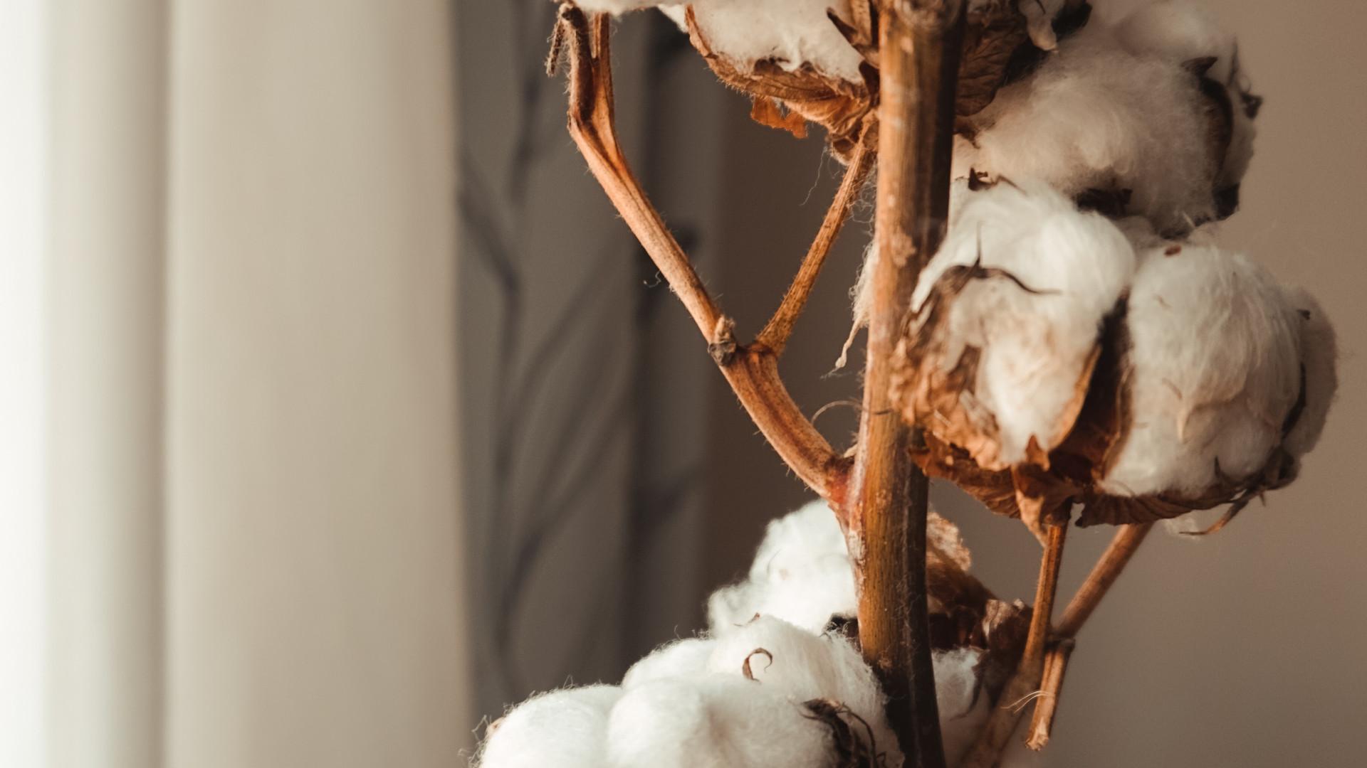 미국 서부와 남서부에서 재배되는 수피마 코튼은 일반적인 코튼보다 섬유의 길이가 길며, 긴 길이 만큼 더욱 세심한 관리로 최상의 품질을 보존하기 위해 수세기 동안 연구되었습니다.   인공적인 관리 방법보다 가장 진보된 농업 공정을 사용하고 개발하는 기술자들의 손에서 탄생하게 됩니다. 수피마코튼은 적은 필링으로 오래도록 지속되는 강력한 탄력성과 생생한 색감을 냅니다. 희귀하고 우수한 천연섬유인 수피마코튼으로 오직 라바르카비스포크에서 경험할 수 있는 커스터마이징 캐주얼 라인의 폴로셔츠 프로젝트