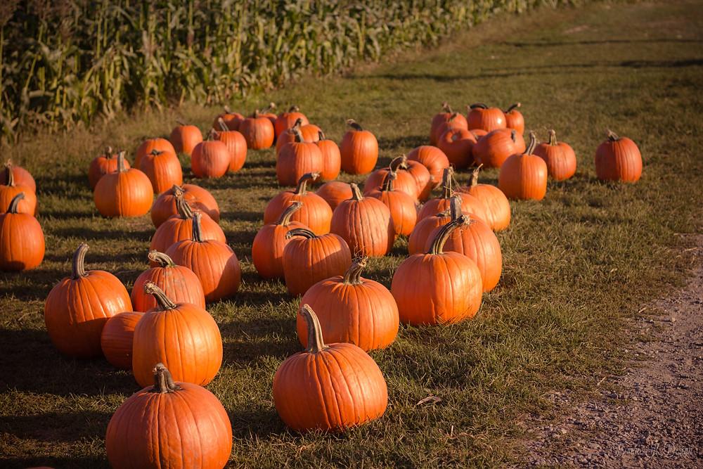 pumpkins on ground in minocqua wisconsin