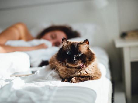 Schlafen Katzenhalter schlechter?